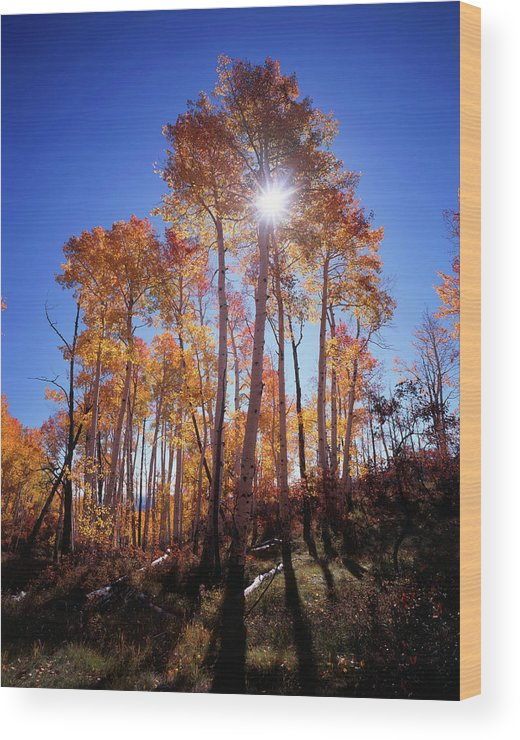Adnt Wood Print featuring the photograph California, Sierra Nevada Mountains by Christopher Talbot Frank