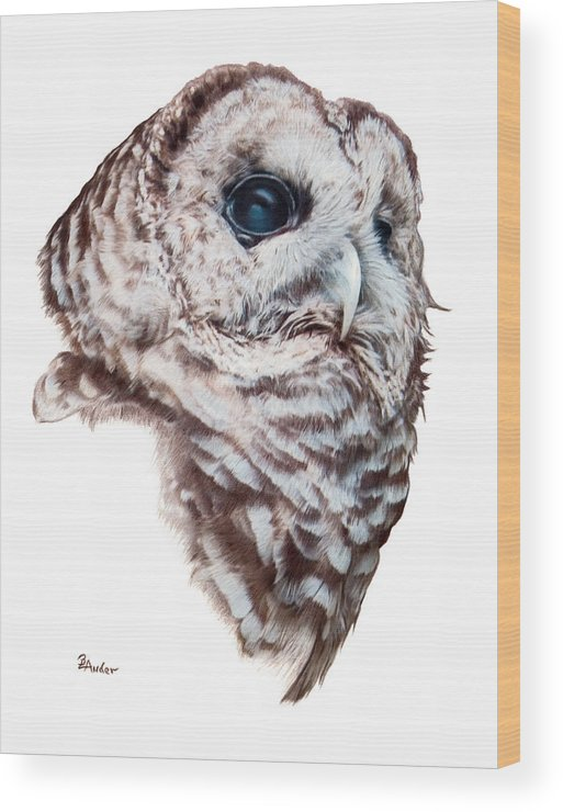 Barred Owl Wood Print featuring the drawing Barred Owl by Brent Ander