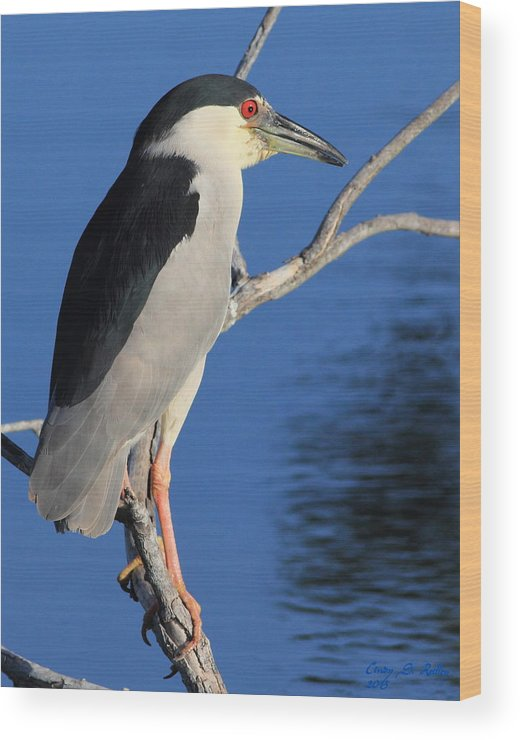 Bird Wood Print featuring the photograph Black Crowned Night Heron by Cindy Reilley