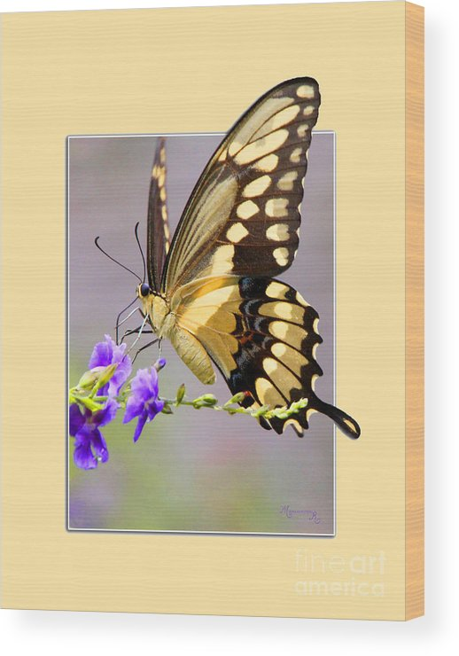 Butterfly Wood Print featuring the photograph Butterfly by Mariarosa Rockefeller