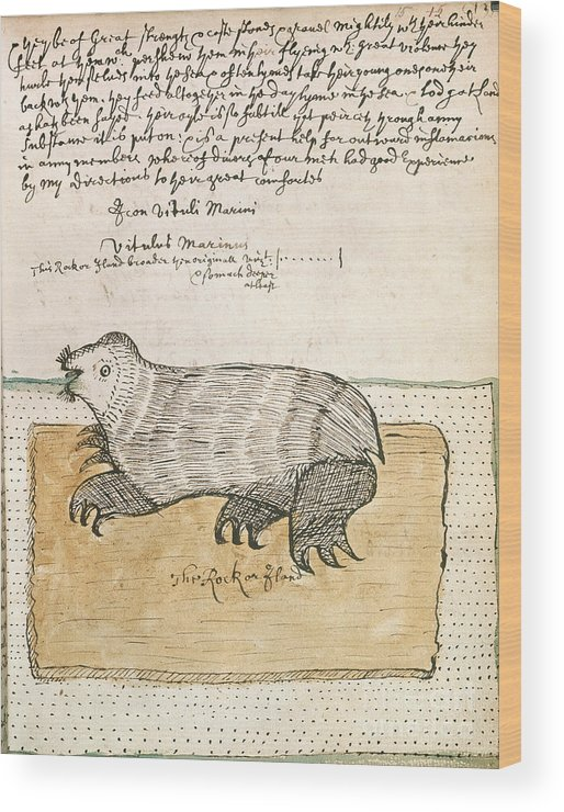 Drawing Wood Print featuring the photograph Drawing Of A Seal by British Library