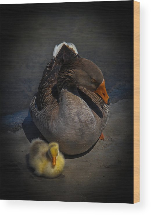 Gosling Wood Print featuring the photograph Goose And Gosling by Stephen Hess
