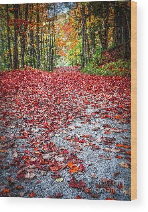 Fall Wood Print featuring the photograph Nature's Red Carpet by Edward Fielding