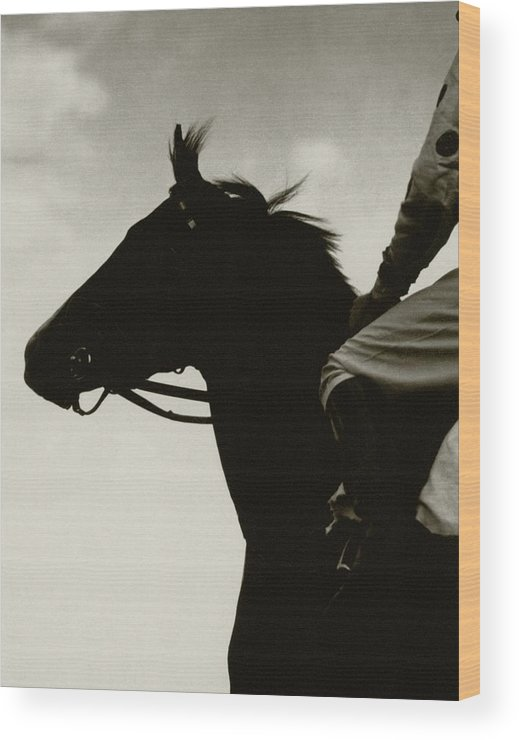 Animal Wood Print featuring the photograph Race Horse Gallant Fox by Edward Steichen