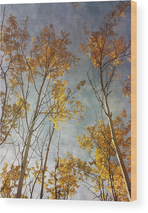 Leaves Wood Print featuring the photograph Sunny Leaves Tall by Priska Wettstein