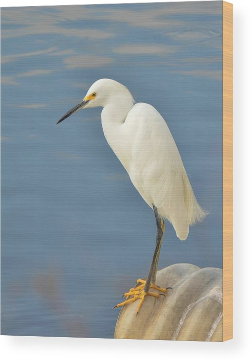 Snowy Egret Wood Print featuring the photograph Snowy Egret by Sara Edens