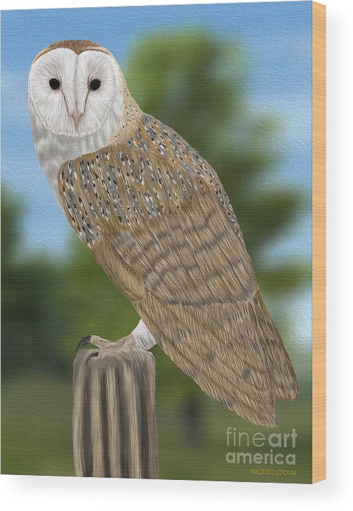 Barn Owl Wood Print featuring the digital art Barn Owl by Walter Colvin