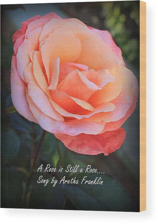 Macro Wood Print featuring the photograph A Rose Is Still A Rose by Dora Sofia Caputo Photographic Design and Fine Art