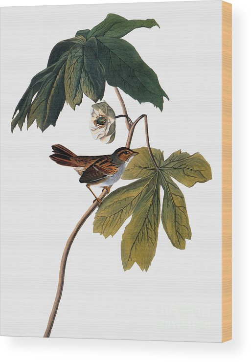 1827 Wood Print featuring the photograph Audubon: Sparrow, 1827-38 by Granger