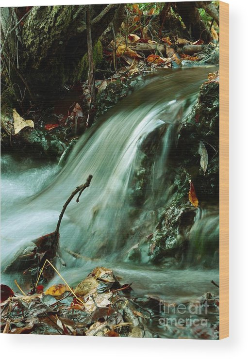 Creek Wood Print featuring the photograph Beautiful Creek by Mario Brenes Simon