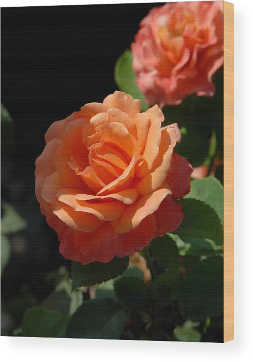 Rose Wood Print featuring the photograph Flowers 112 by Joyce StJames