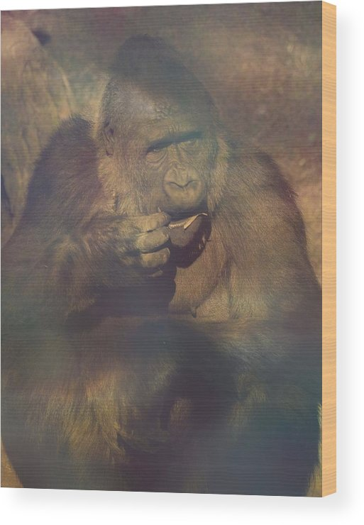 Gorilla Wood Print featuring the photograph Gorilla In The Mist by Lori Seaman