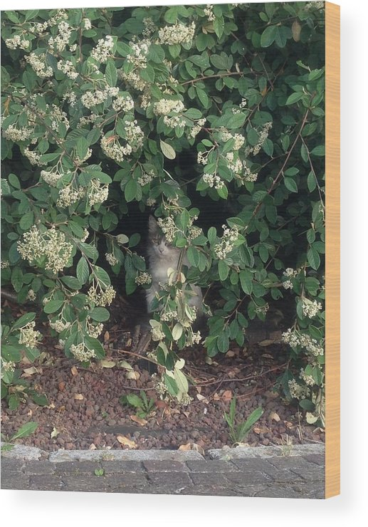 Grey Cat Wood Print featuring the photograph iCat by Anna Fabro