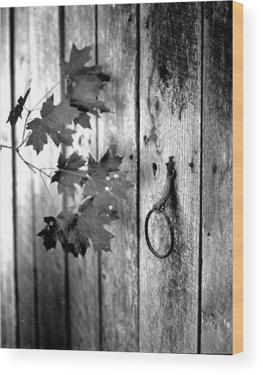 Wood Print featuring the photograph Japton Door by Curtis J Neeley Jr