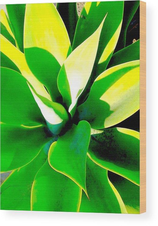 Succulent Wood Print featuring the photograph Jungle Dance by Steve Travis