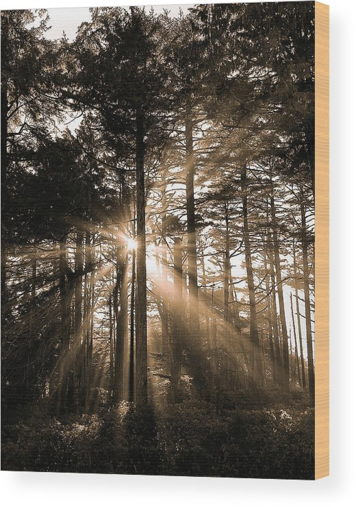 Forest Wood Print featuring the photograph Light Through The Forest by Naman Imagery