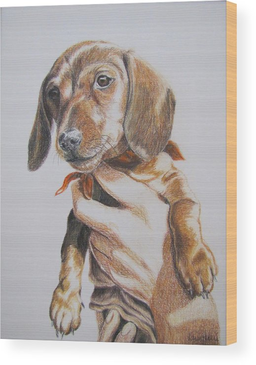 Puppy Wood Print featuring the drawing Sambo by Karen Ilari