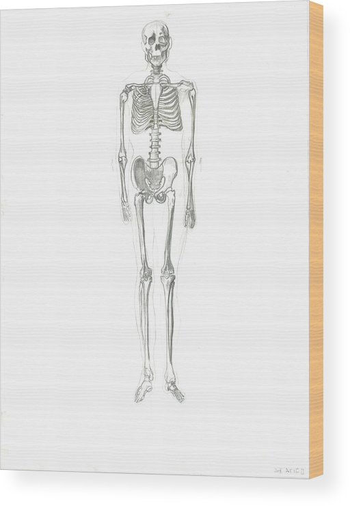 Wood Print featuring the drawing Skeleton by Joseph Arico
