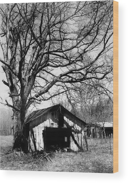 Ansel Adams Wood Print featuring the photograph Tree-hut by Curtis J Neeley Jr