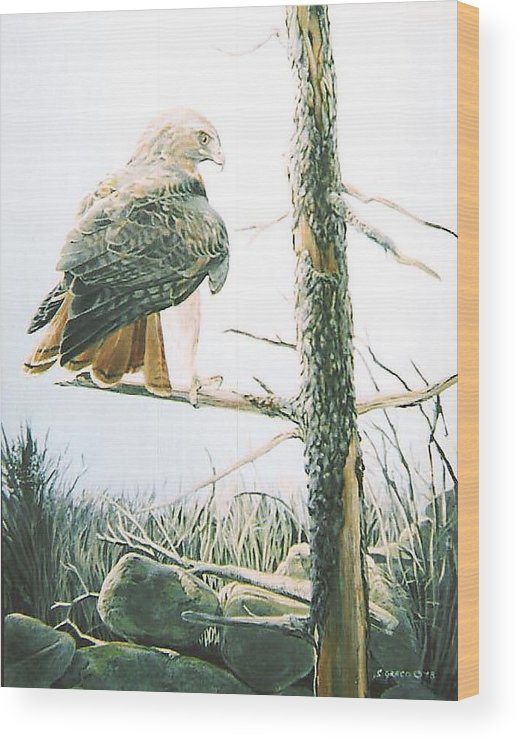 Wildlife Wood Print featuring the painting Redtail Hawk by Steve Greco