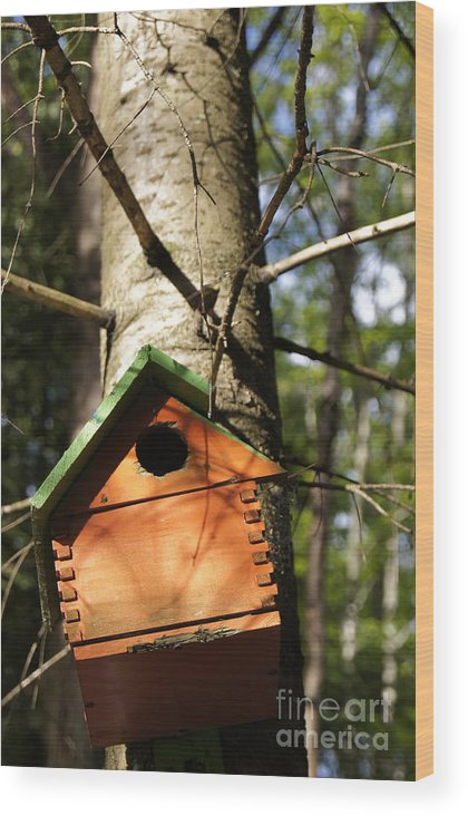 Landscape Wood Print featuring the photograph Birdhouse By Line Gagne by Line Gagne
