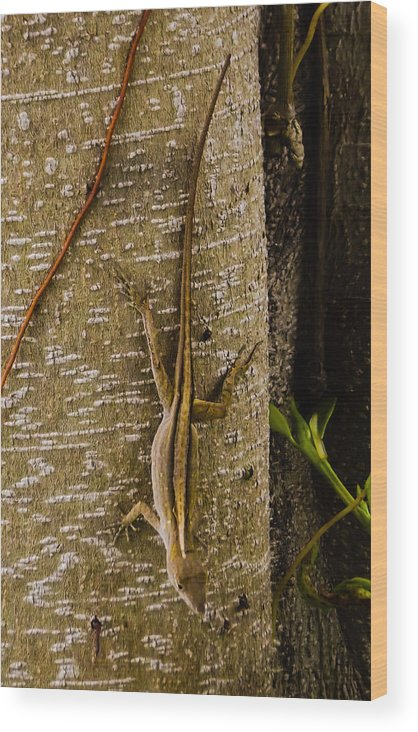 Florida Brown Anole Wood Print featuring the photograph Brown Anole Lizard In Florida by Zech Browning