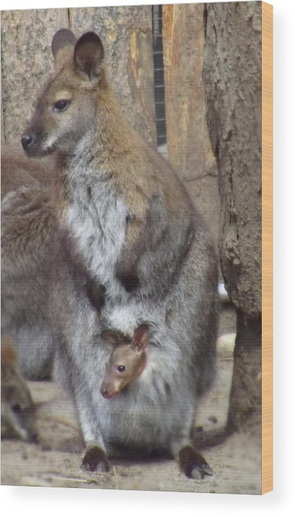 Wallaby Wood Print featuring the photograph Momma And Baby by Robin Cox