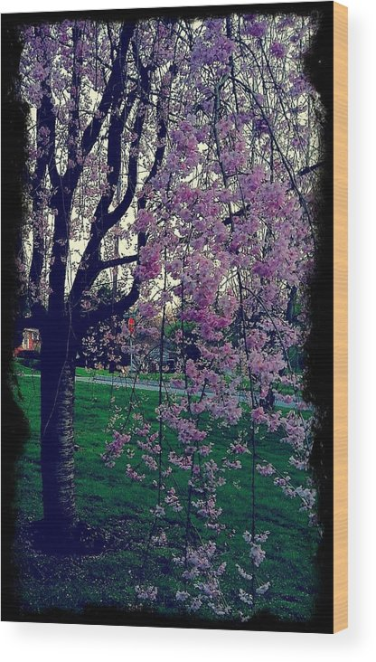 Tree Wood Print featuring the photograph Spring Tree by Heather Burbridge