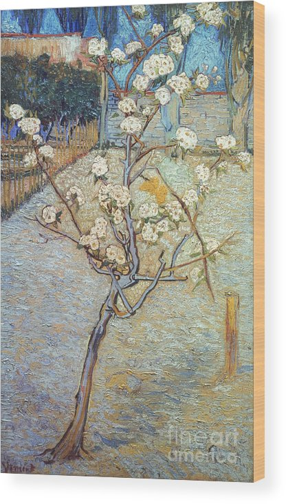 1888 Wood Print featuring the photograph Van Gogh: Peartree, 1888 by Granger