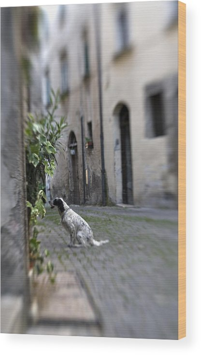 Dog Wood Print featuring the photograph Waiting by Marilyn Hunt