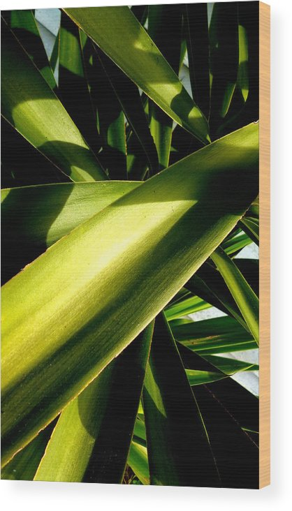 Yucca Wood Print featuring the photograph Yucca by Dianne Pettingell