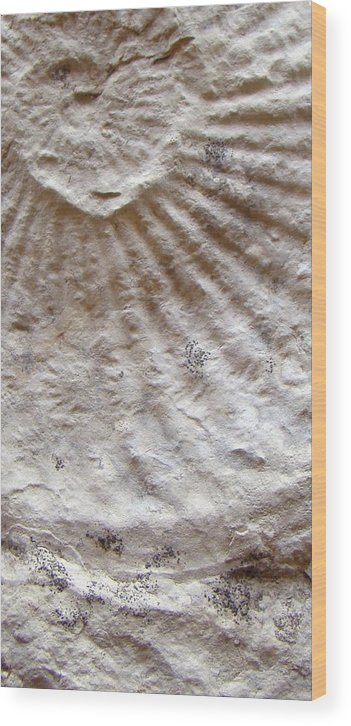 Fossil Wood Print featuring the photograph Fossil Three by Ana Villaronga