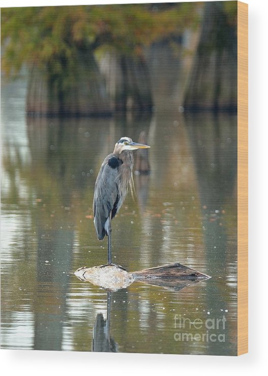 Wood Print featuring the photograph Great Blue Heron by Kevin Pugh