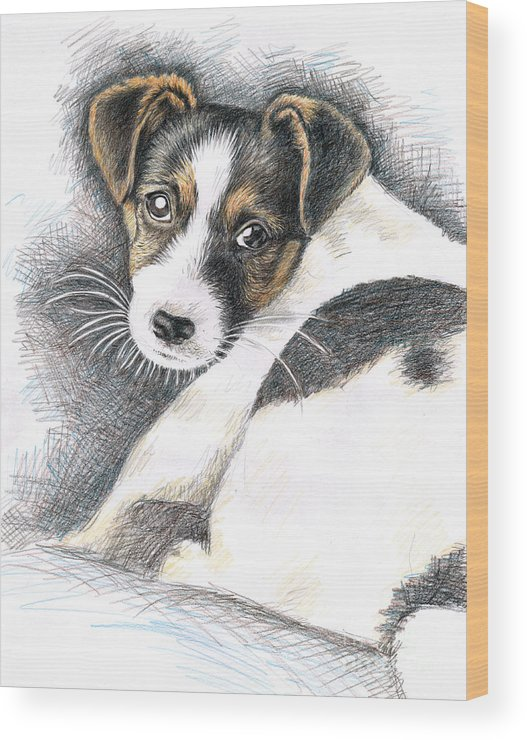 Dog Wood Print featuring the drawing Jack Russell Puppy by Nicole Zeug