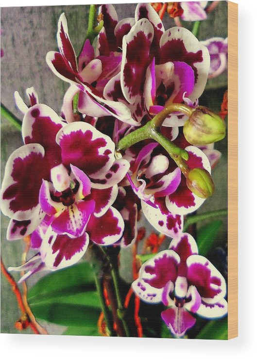 Flower Blooms Wood Print featuring the photograph Orchids 21 by Ron Kandt