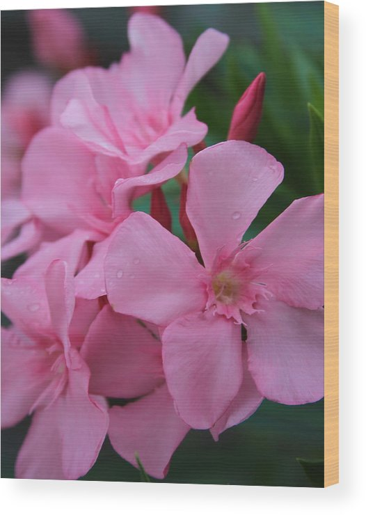 Oleander Wood Print featuring the photograph Pink Oleander 6 by Cathy Lindsey