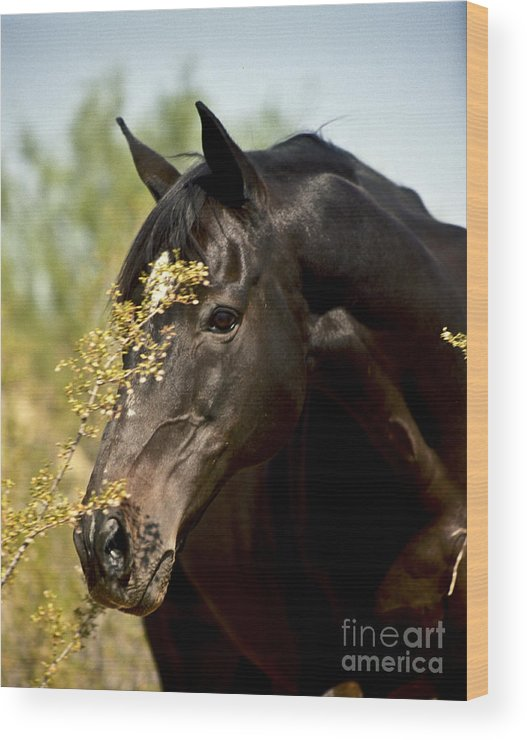 Horse Wood Print featuring the photograph Portrait Of A Thoroughbred by Kathy McClure