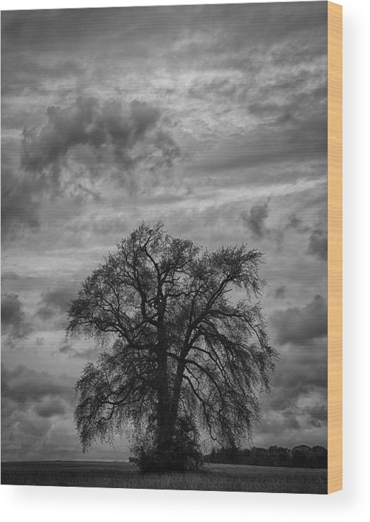 Black And White Wood Print featuring the photograph Stormy Tree by Gavin Baker