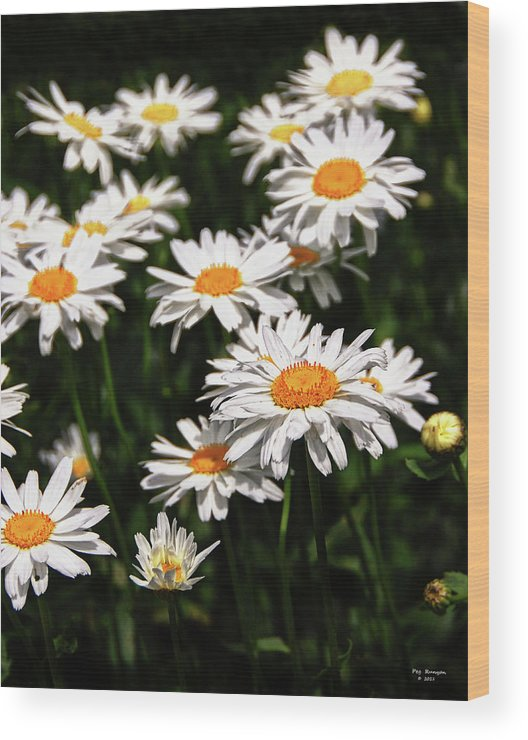 White Dasies Wood Print featuring the photograph Field Of White Dasies by Peg Runyan