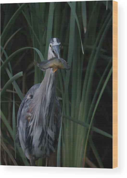 Animals Wood Print featuring the photograph Just For You by Ernie Echols
