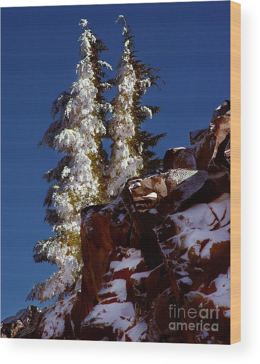 Snow Tipped Trees Wood Print featuring the photograph Snow Tipped Trees by Peter Piatt
