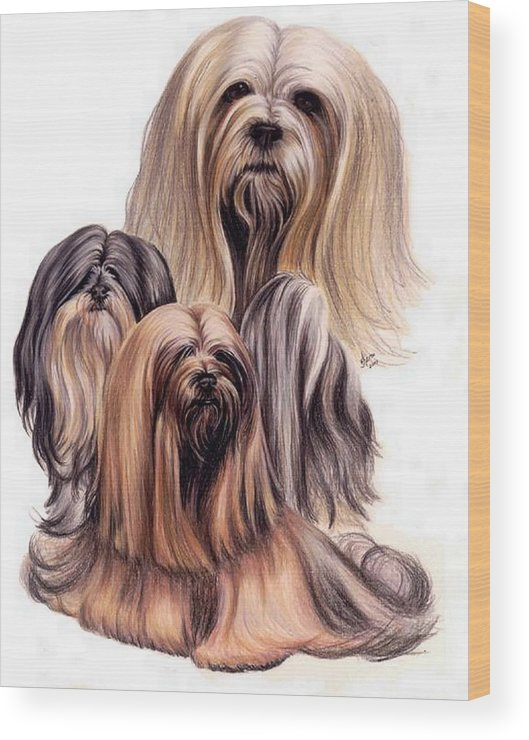 Purebred Wood Print featuring the drawing Lhasa Apso Triple by Barbara Keith