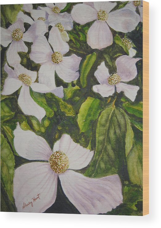 Landscape Wood Print featuring the painting Bc Dogwoods by Shirley Braithwaite Hunt