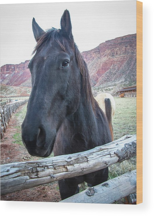 Nature Wood Print featuring the photograph Black Beauty by Steve Marler
