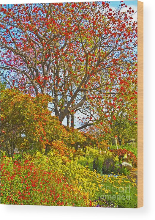 Coral Tree Wood Print featuring the photograph Flame Tree by Edita De Lima