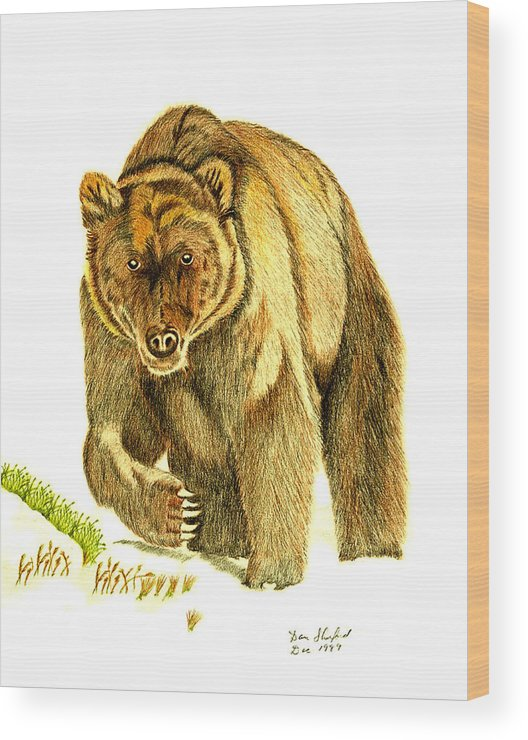 Dan Shuford Wood Print featuring the drawing Grizzly Bear by Daniel Shuford