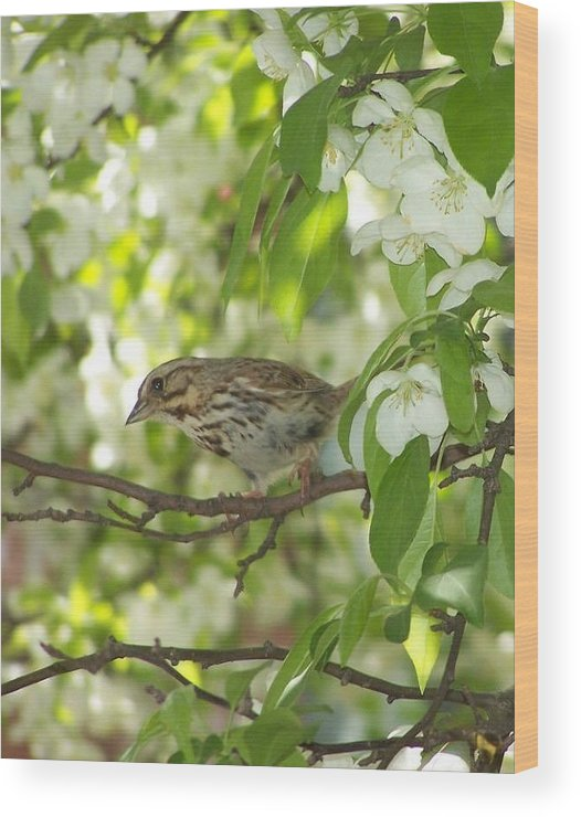 Bird Wood Print featuring the photograph I See You by Joanna Raber