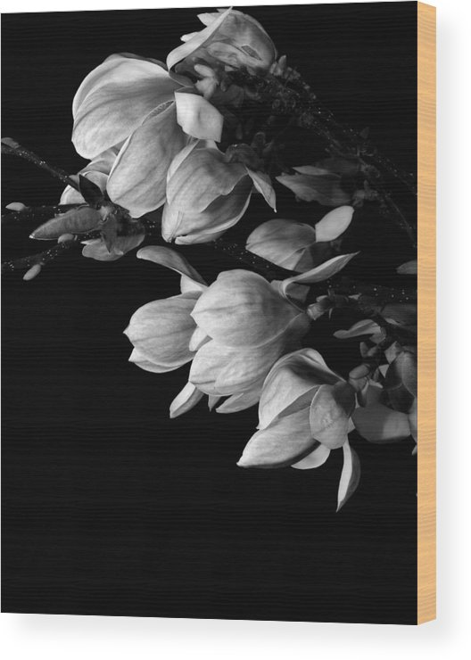 Flower Wood Print featuring the photograph Magnolia Black And White by Craig Perry-Ollila