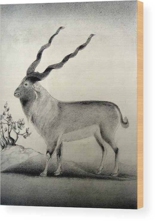 Mughal Miniature Wood Print featuring the drawing Miniature Drawing Of Oryx by Caroline Urbania Naeem