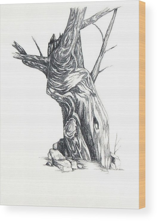 Tree Wood Print featuring the drawing Old Tree by Brandy House